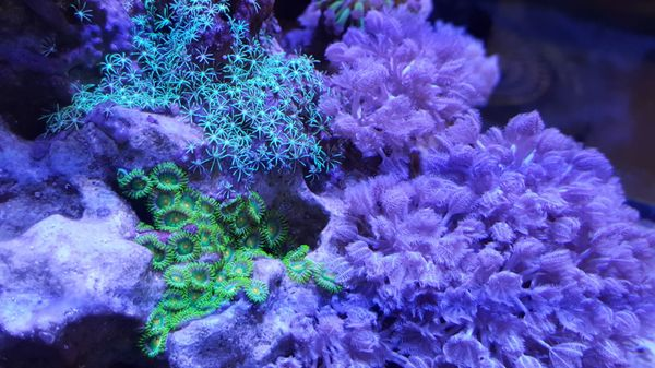 zoa, gsp and xenia starting to take over
