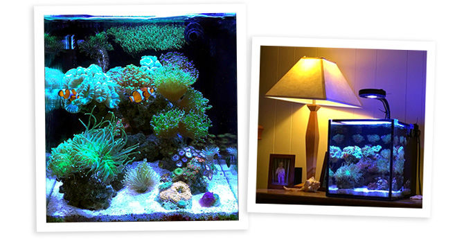 SURVEYMAN46123's 10 Gallon Nano Reef