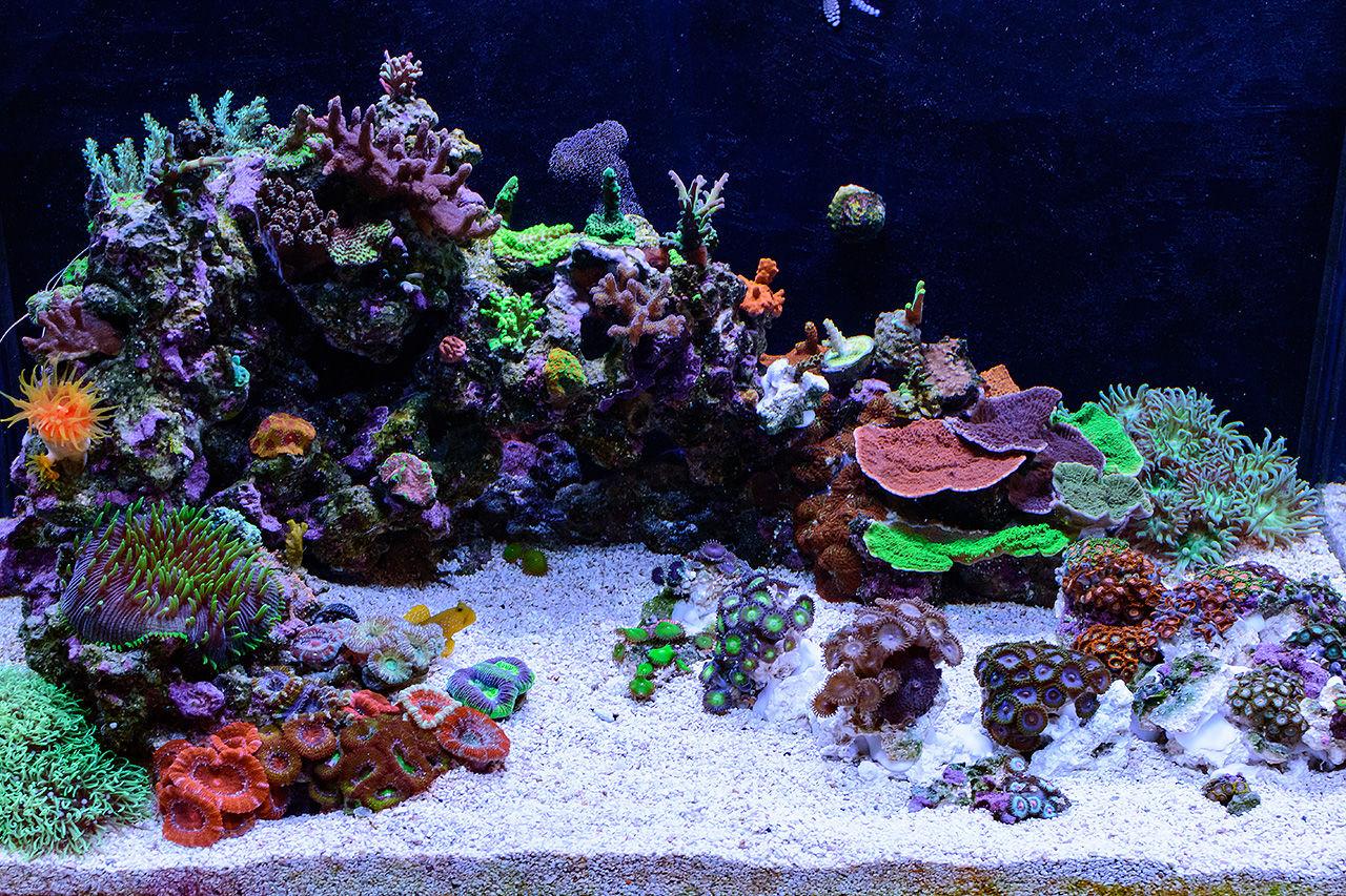teenyreef s 40 gal im nuvo fusion nano reef aquarium june 2018