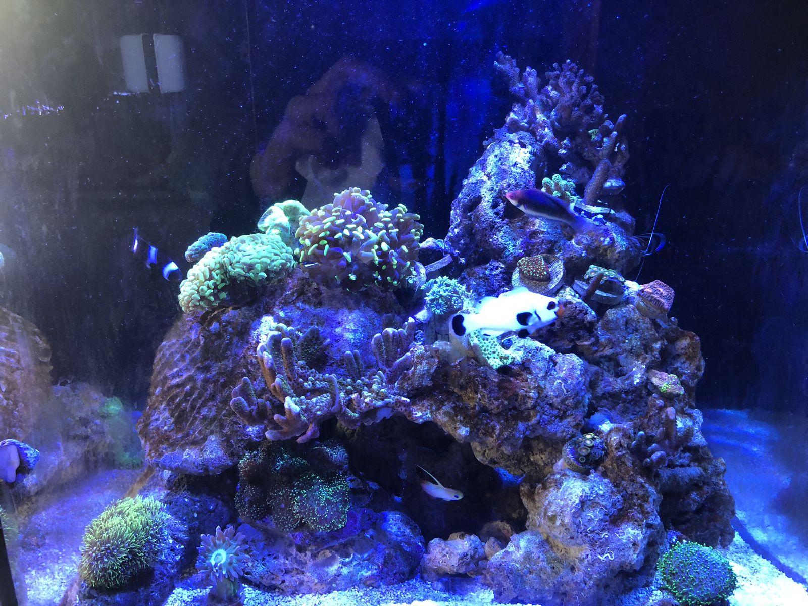 bostonreef s red sea reefer nano build mixed reef aquarium
