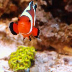 Fluval Flex 15 Project - Aquarium Journals - Nano-Reef com Community