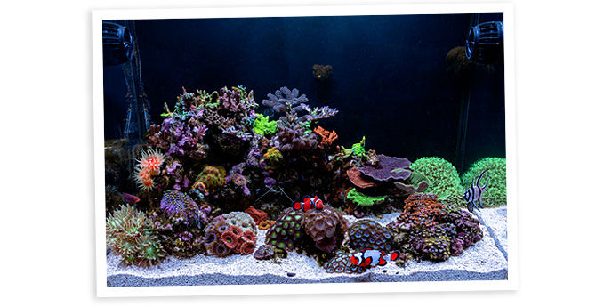 teenyreef's 40 Gallon Nano Reef