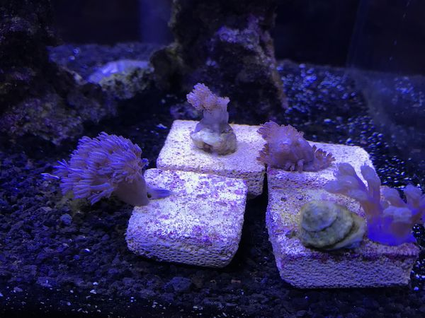 soft coral pack from live aquaria
