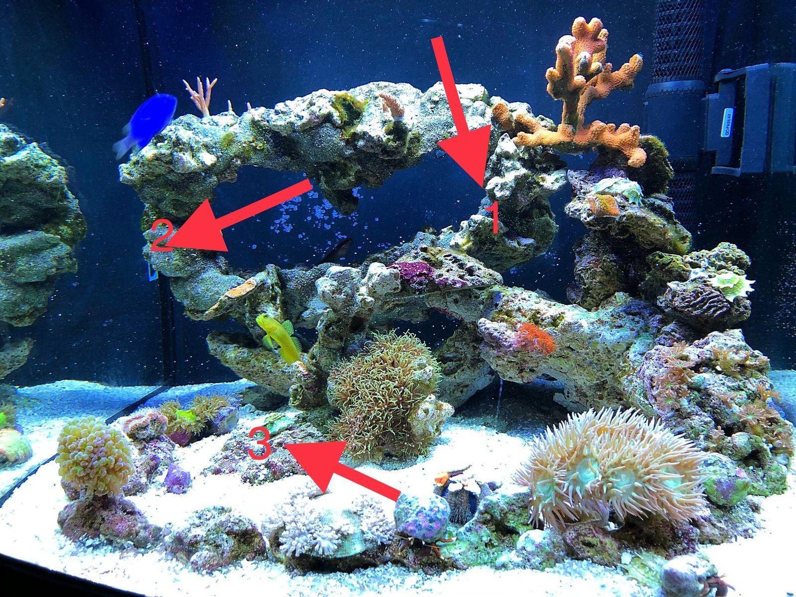 startupinsights.org & Flower Pot Coral \u0026 Reef Central