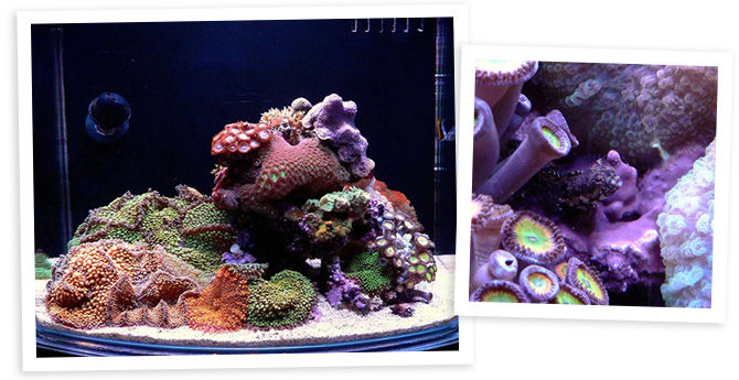 Nano sapiens' 12 Gallon Nano Reef Aquarium
