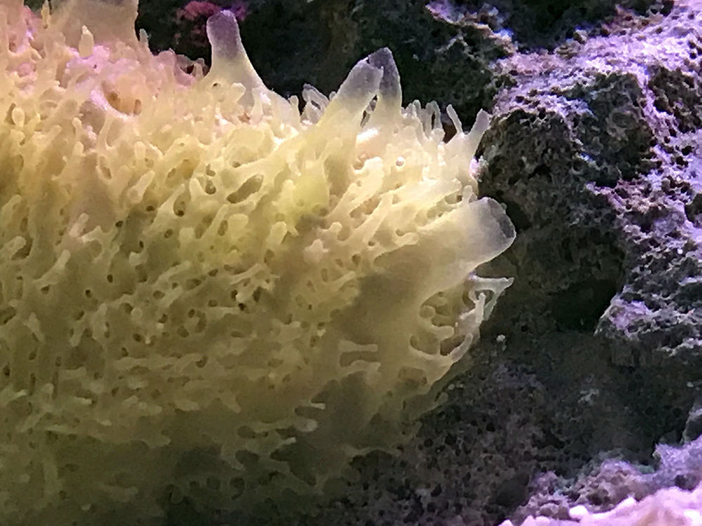 Inverts-Yellow-Sponge.jpg