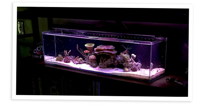 WV Reefer's 12 Gallon Nano Reef Aquarium