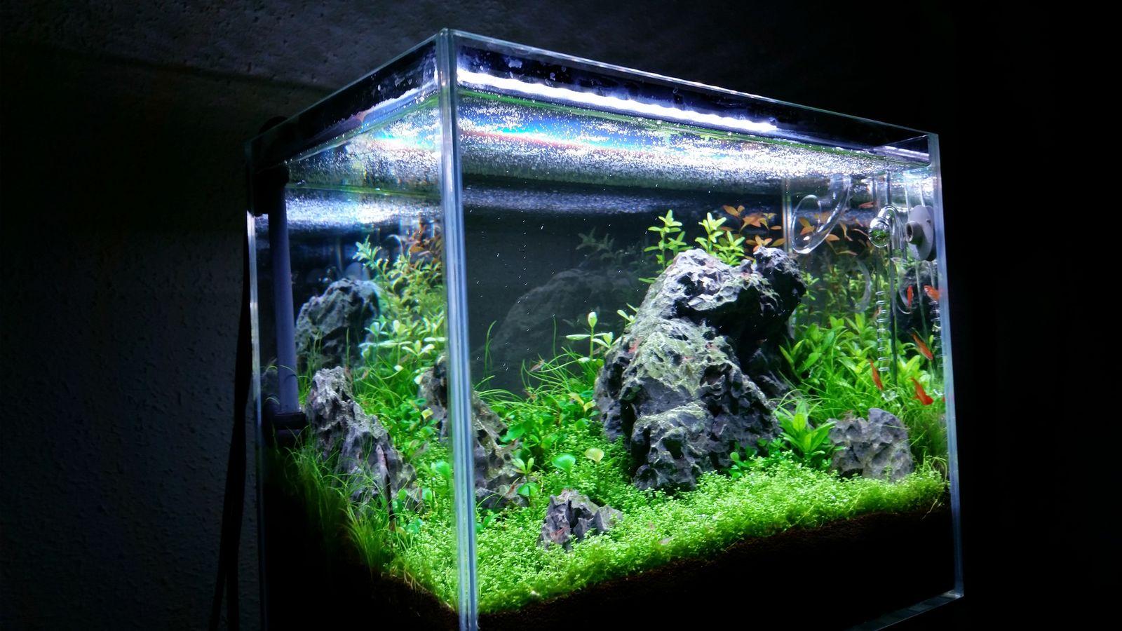 red sea max nano aquarium journals nano reef com community