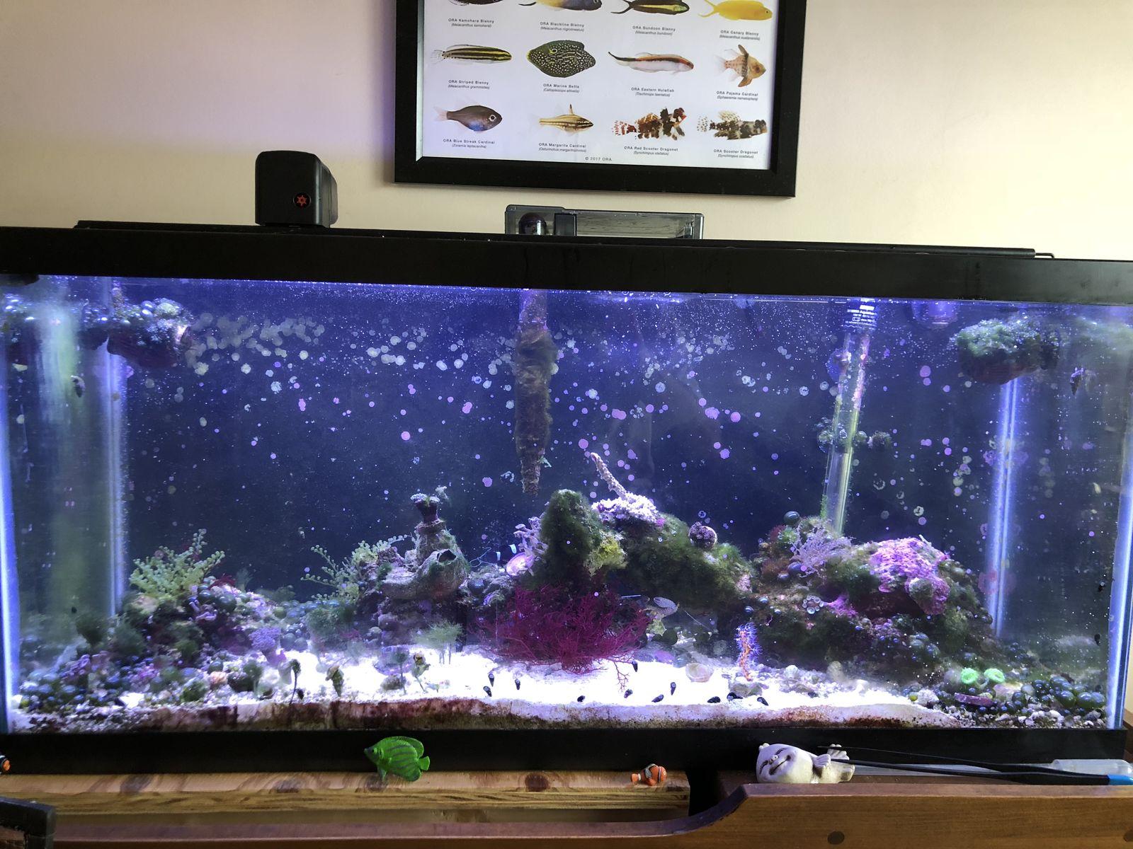 jesse s 30 gallon reef 10 gallon planted dorm tank page 6