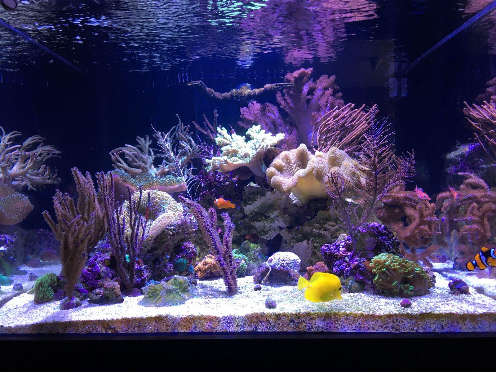 sharbuckles 78g starphire cube large reefs nano reef com community