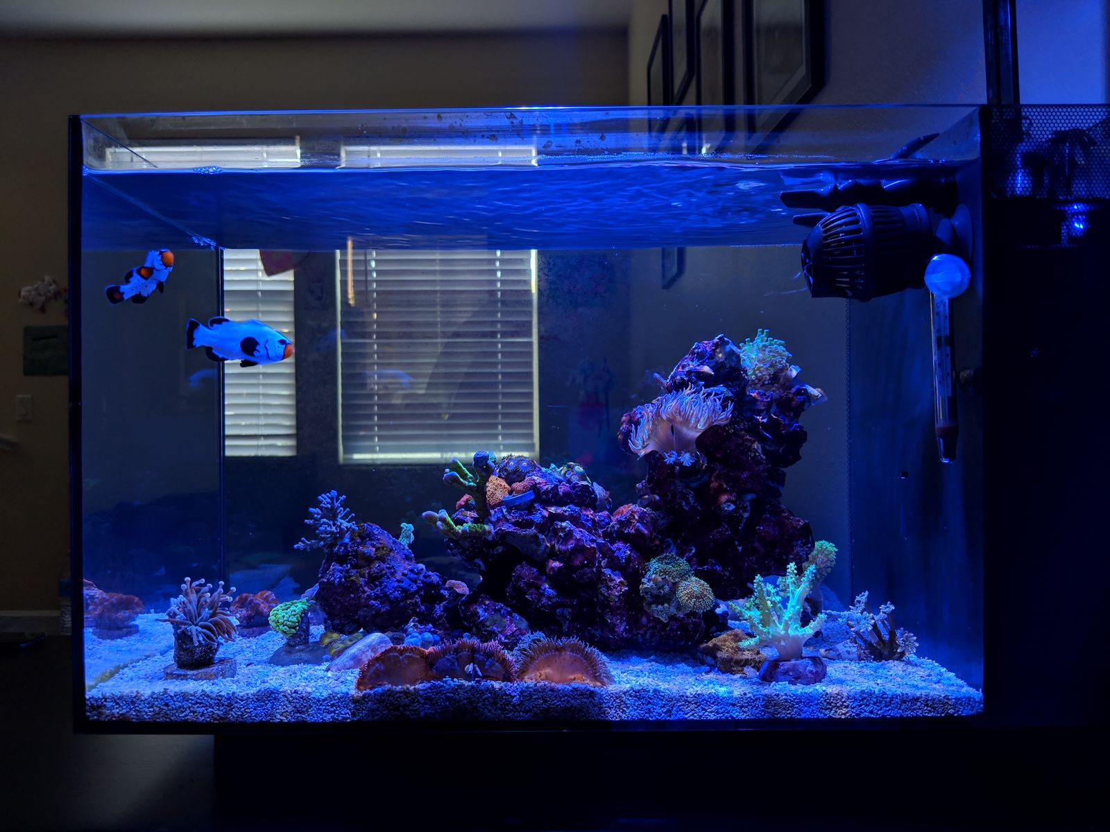 fluval evo 13 5 peninsula aquarium journals nano reef com community
