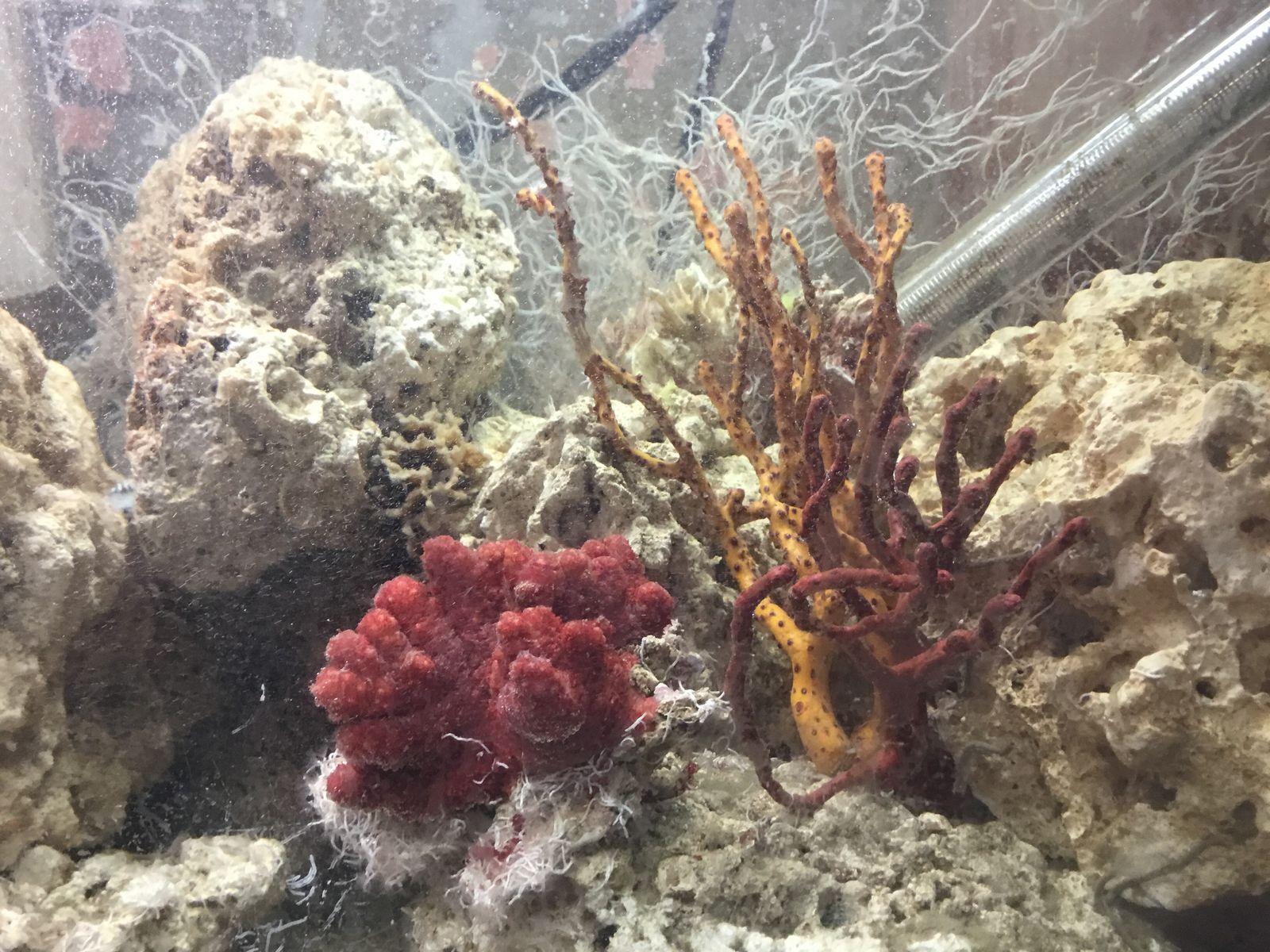 monthly reef profile totm nominations page 63 aquarium