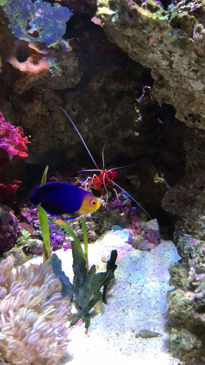 Bullseye got in the way of my fire shrimp pic