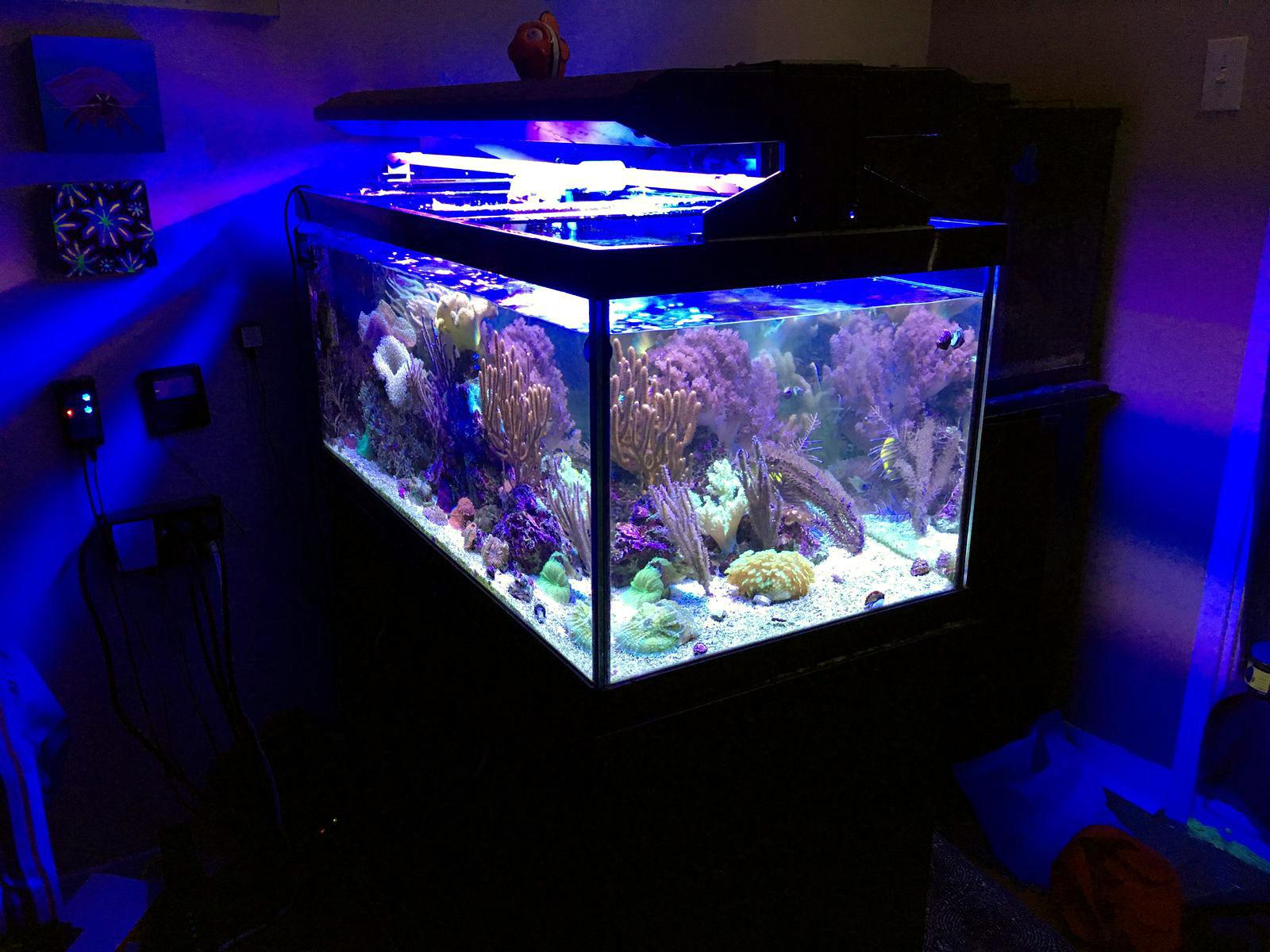 Sharbuckle S 40gal Peninsula Reef Aquarium Display Refugium October 2018 Featured Reef Aquarium
