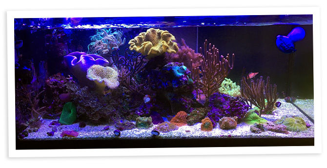 Sharbuckle's 40g Nano Reef & Display Refugium