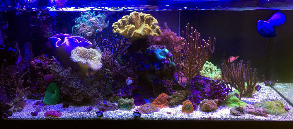october_2018_featured_reef_fts_2.jpg