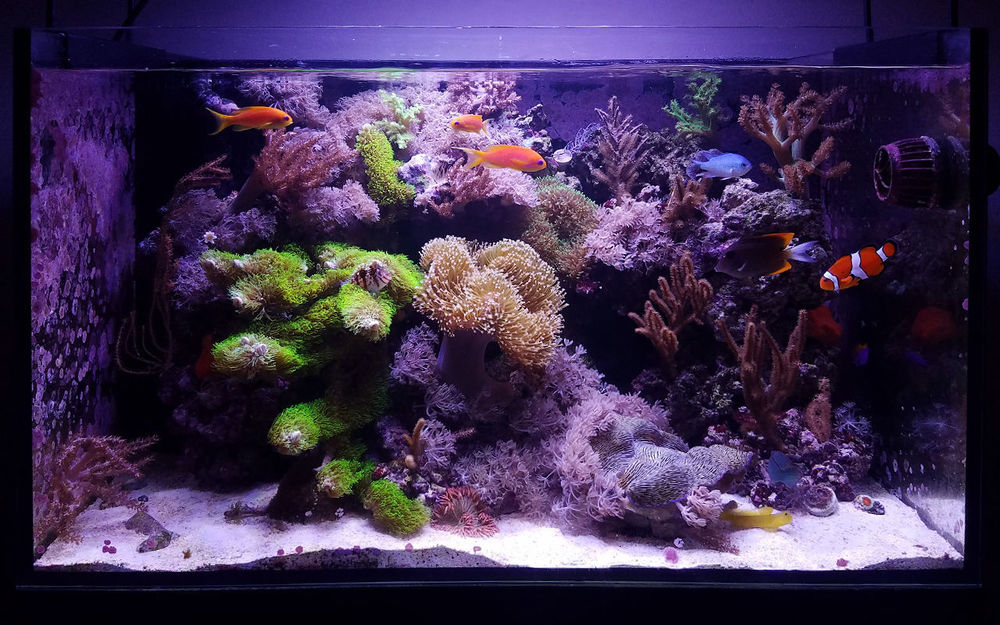 november2018_featured_reef_FTS.jpg