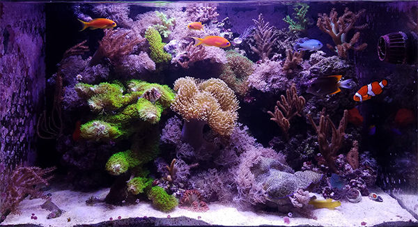 nano reef aquarium community learn how to keep a small saltwater