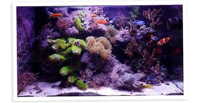 Sharbuckle's 40g Nano Reef & Display Refugium