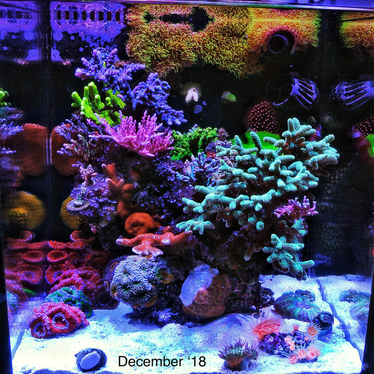 featured reef january 2019 fts.jpg