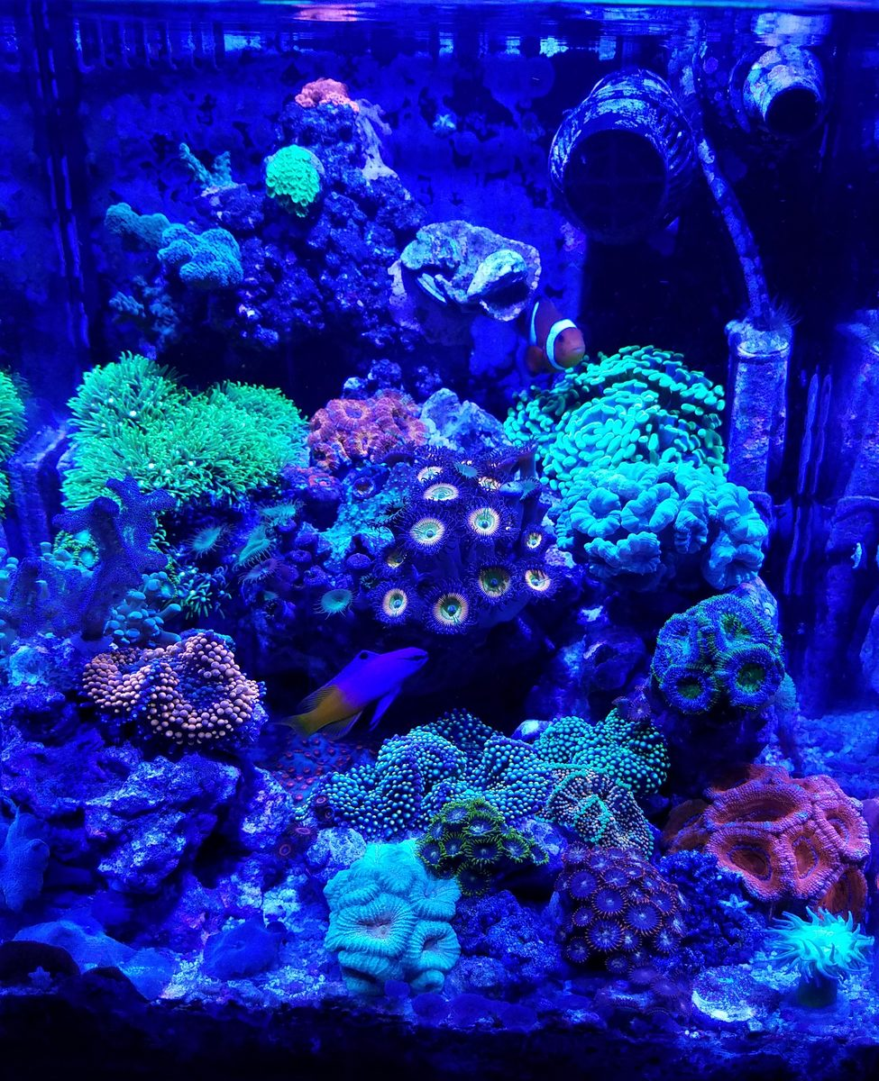 10 gallon mixed reef