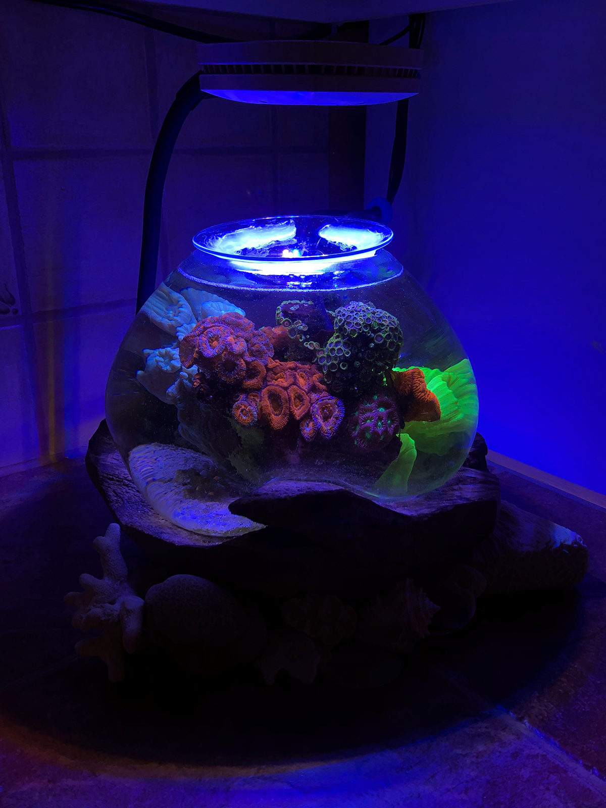 granitereefer 2019 featured reef aquariums nano reef com community