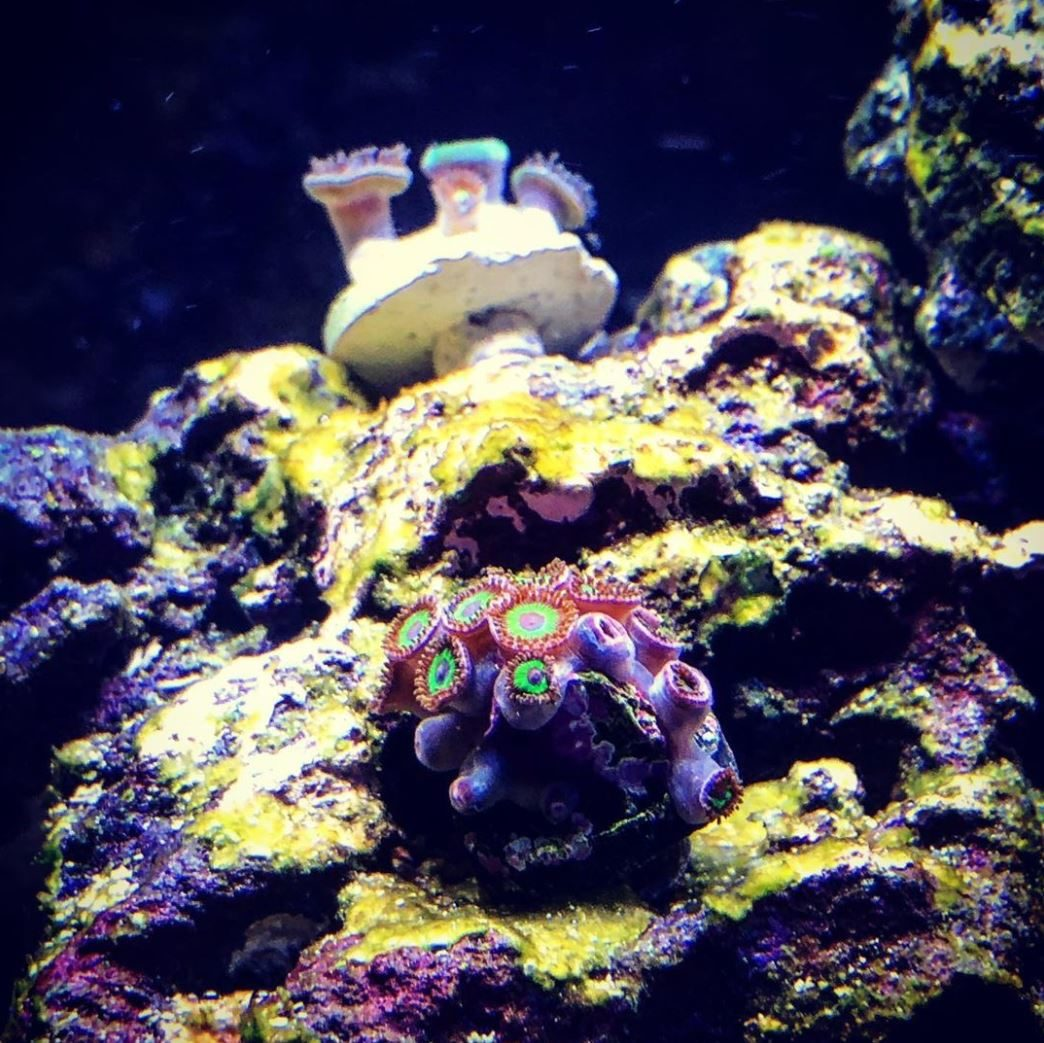 My First Zoas