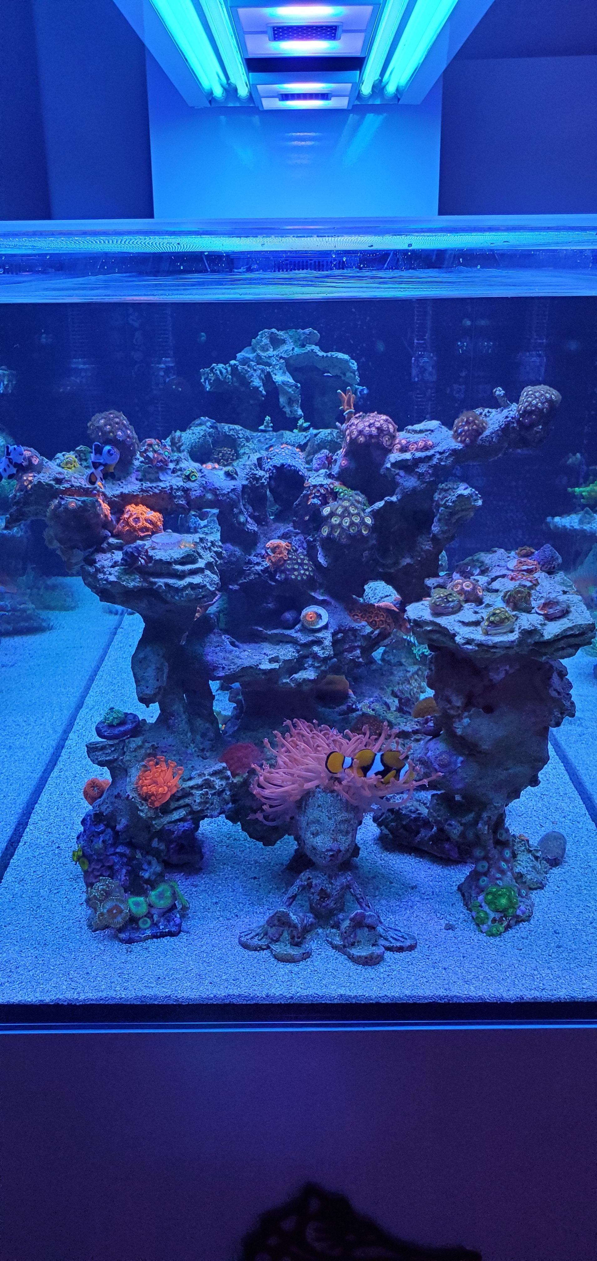Zoanthids Tower