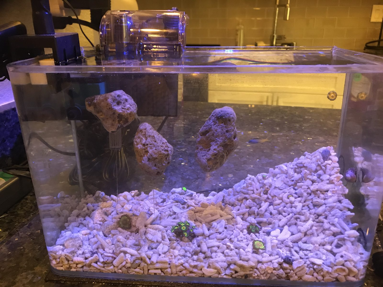 Floating Scape Aquascaping Forum Nano Reef Community