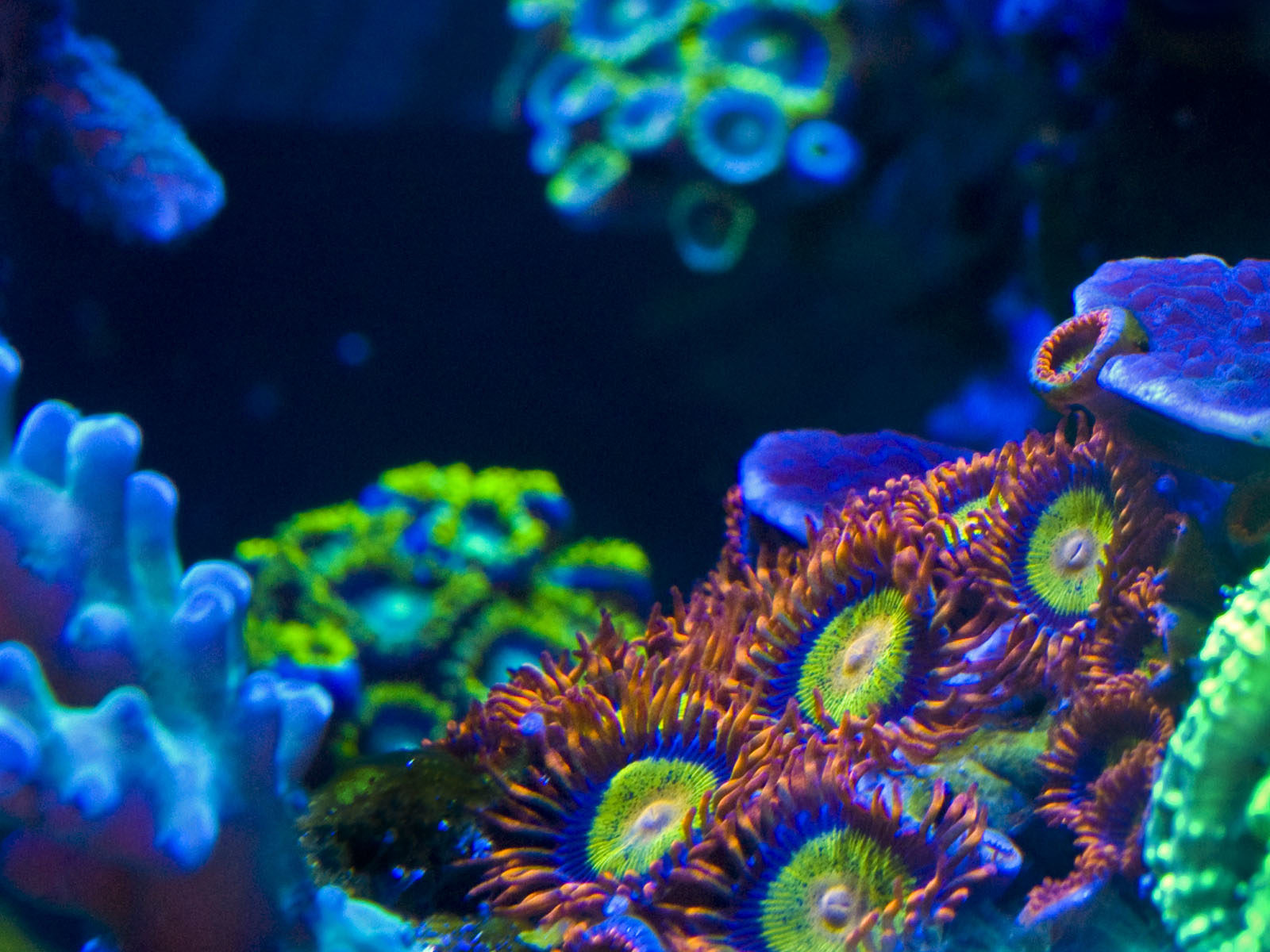 Zoas Fighting for Space