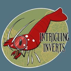 Intriguing Inverts