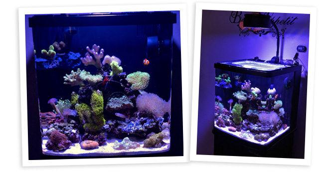 Krish87's 16 Gallon BioCube Nano Reef
