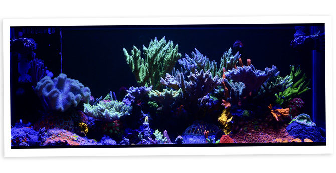 xM3THODx's 20 Gallon Long SPS Dominant Mixed Nano Reef