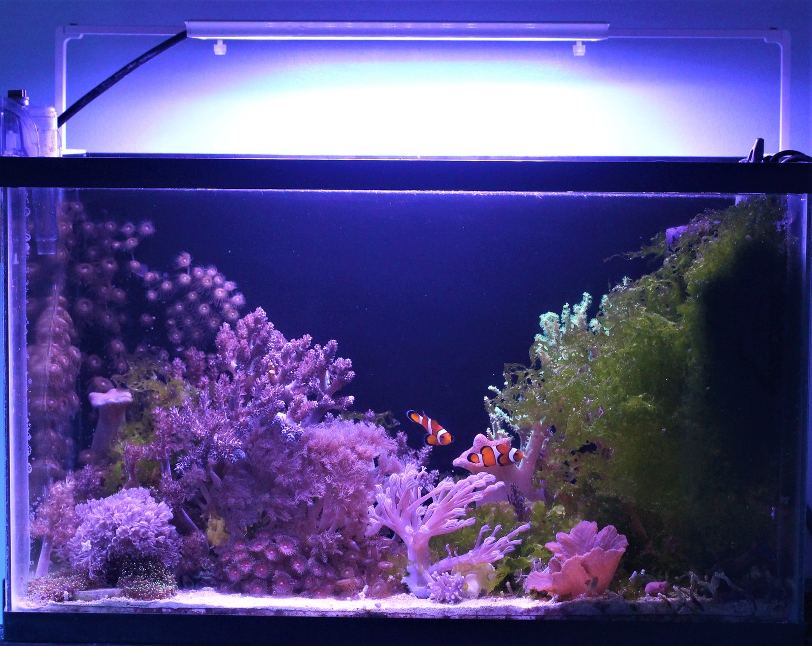 10 gallon soft coral nano reef