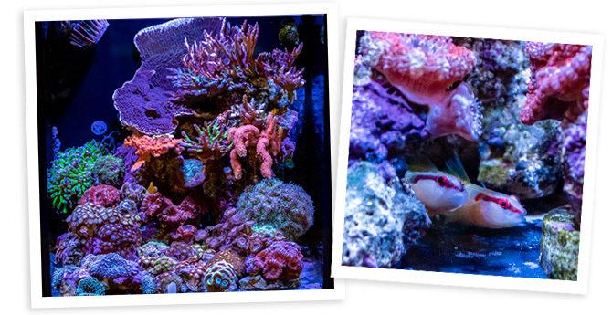 Illumin-8's 8 Gallon Zoa & Paly Dominant Nano Reef