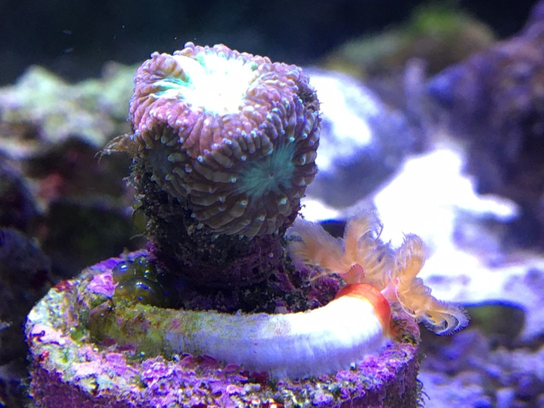 green bubble coral uk betting