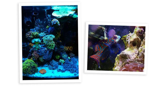 Jackal227's 16 Gallon Biocube Nano Reef