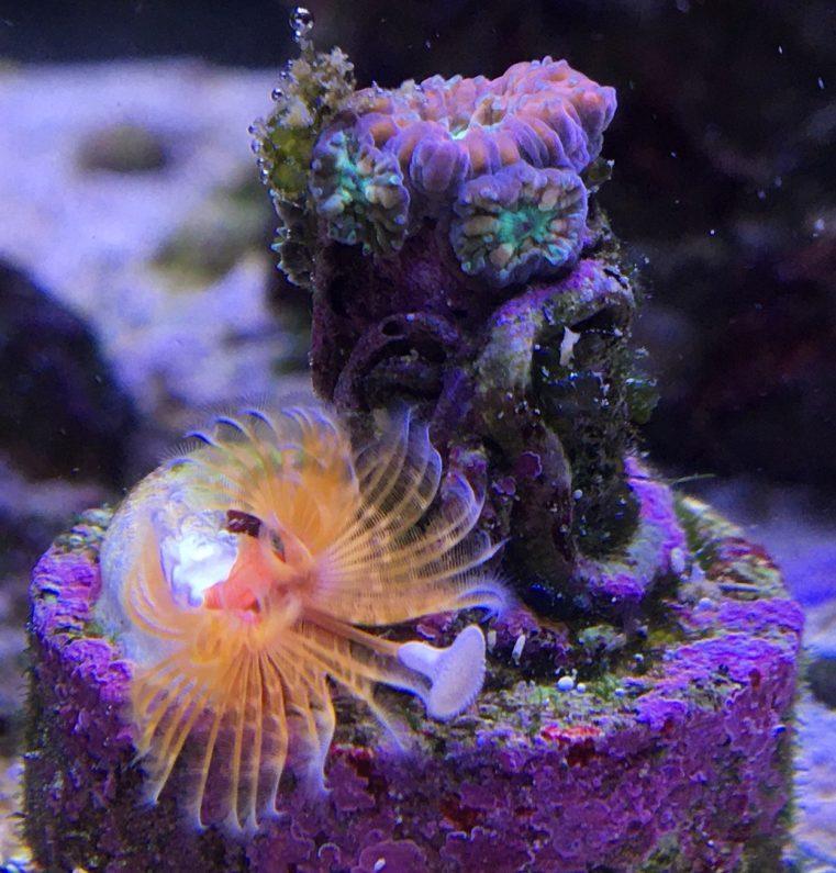 Green bubble coral uk betting sporting braga vs arouca betting previews