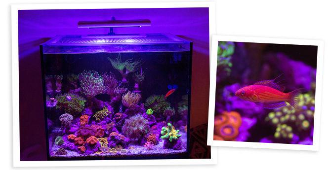 Burt Bollinger's 43 Gallon Nano Reef