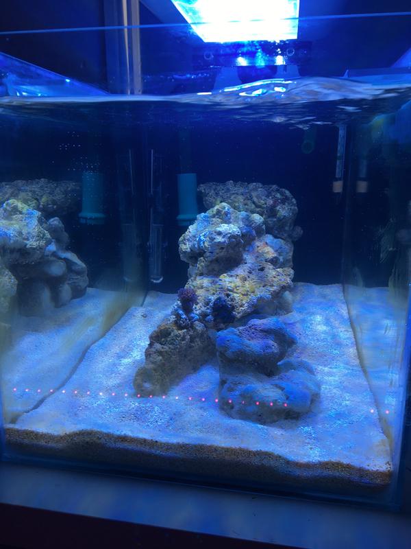 Aqua Scape Feedback Coral Ideas Aquascaping Forum Nano Reef Community