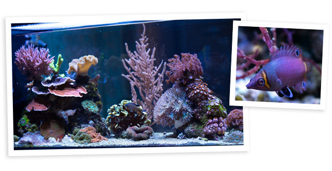 Lizzyann's 20 Gallon Peninsula Nano Reef