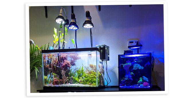SaltyBuddha's 20 Gallon Macroalgae Dominant Nano Reef