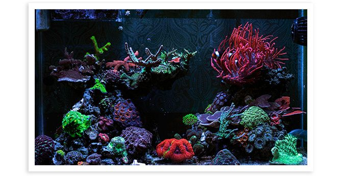 Jservedio's 9 Year Old 20gal Mixed Nano Reef