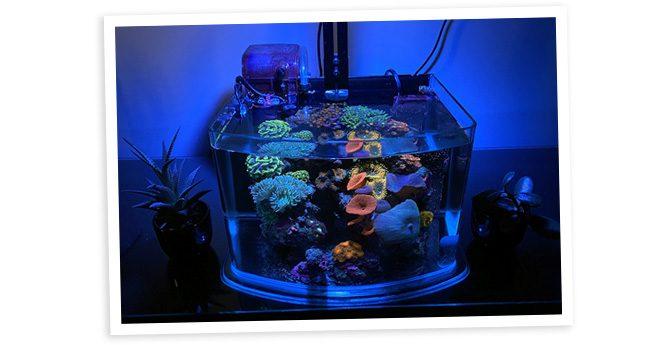 Jon-Paul's 3gal Pico Reef