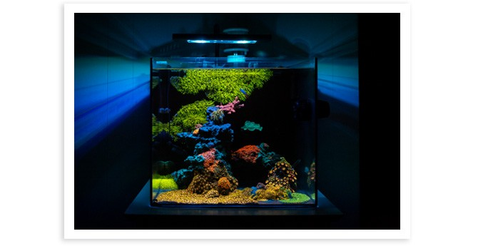 Shaner014's 20gal Nano Reef