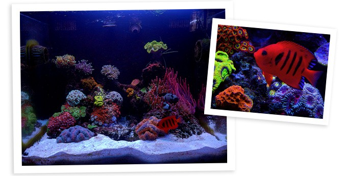Matteo's 40gal Nano Reef