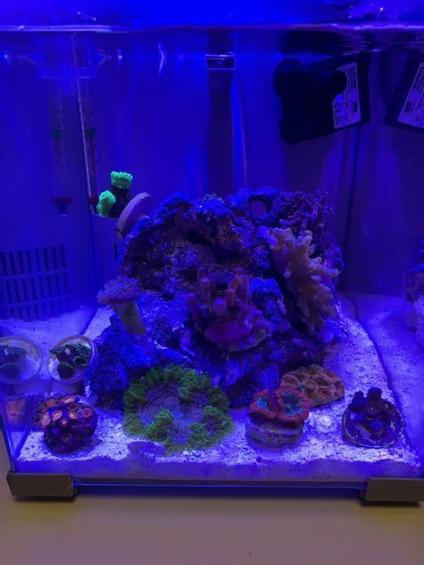 2.5G Pico Office Reef
