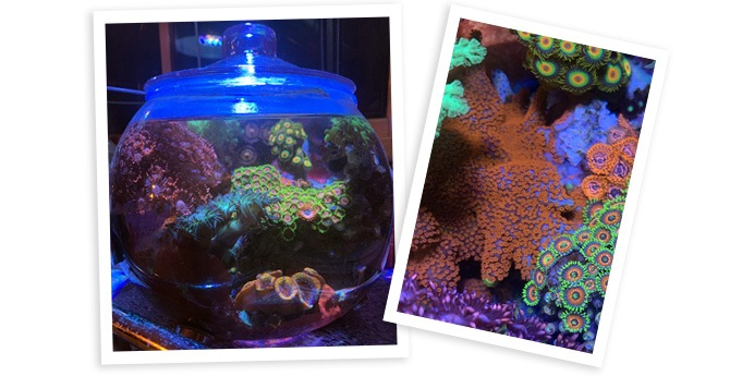 Natalia's 5 Year Old 1.75gal Reef Bowl overall view