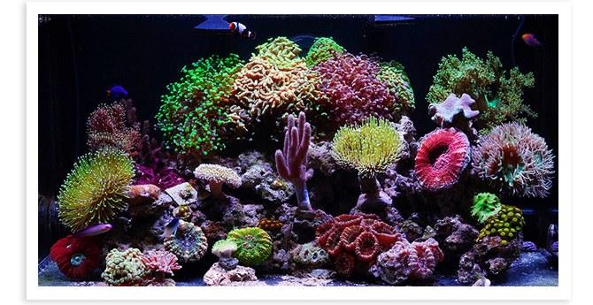 Spazizz 20 Gallon Nano Reef overall view