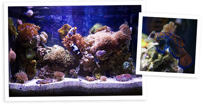 ECLS Reefer's 13.5 Gallon Nano Reef overall view